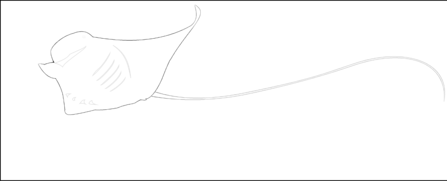 Rumblefish Adventure