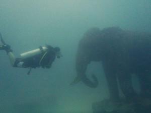 Siam Bay Elephant